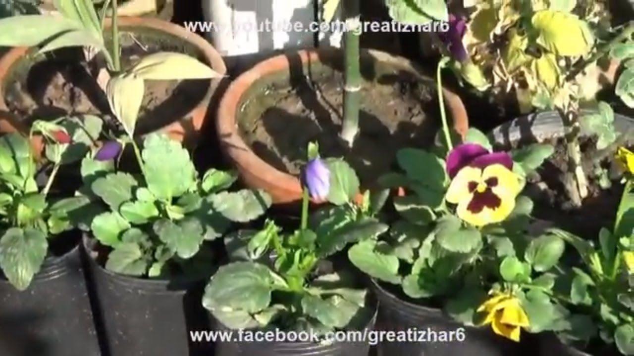 Kitchen Garden Overview | Garden in Home Ideas| March-2017 (urdu ...