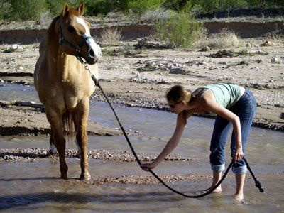 how to get a horse to drink more water