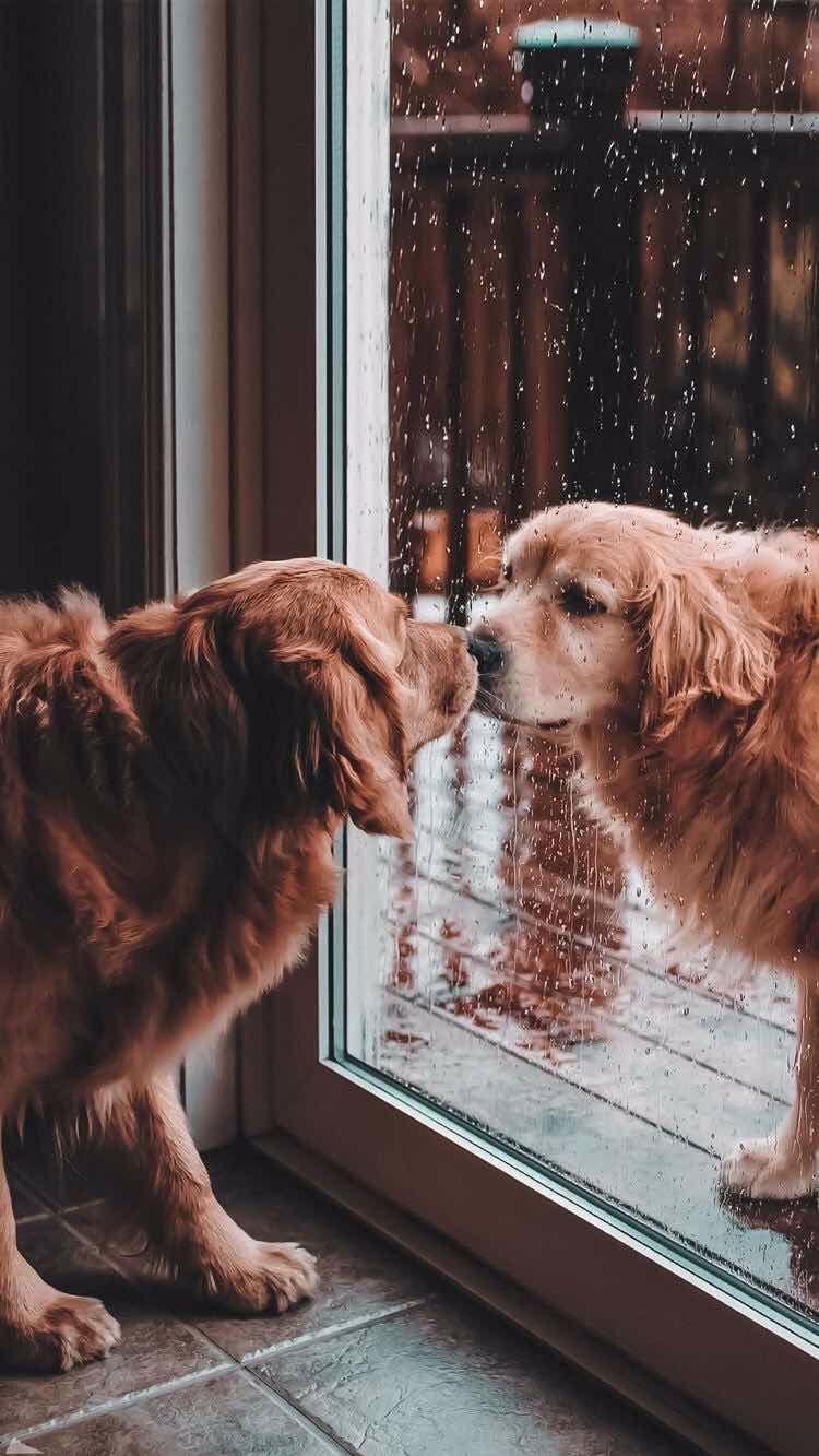 Aesthetic Puppies