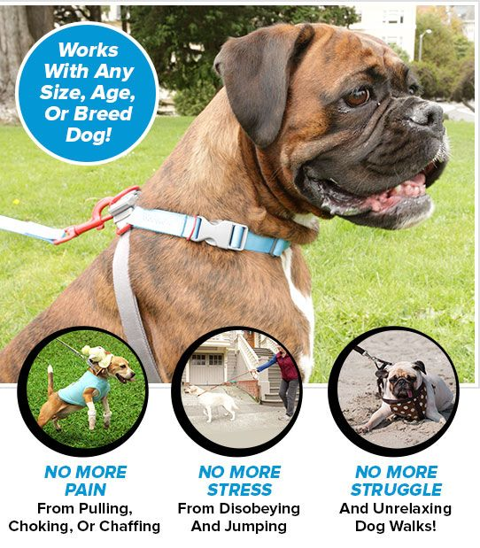 Bodycollar Official Site Jumping Dog Dog Halter Dog Walking