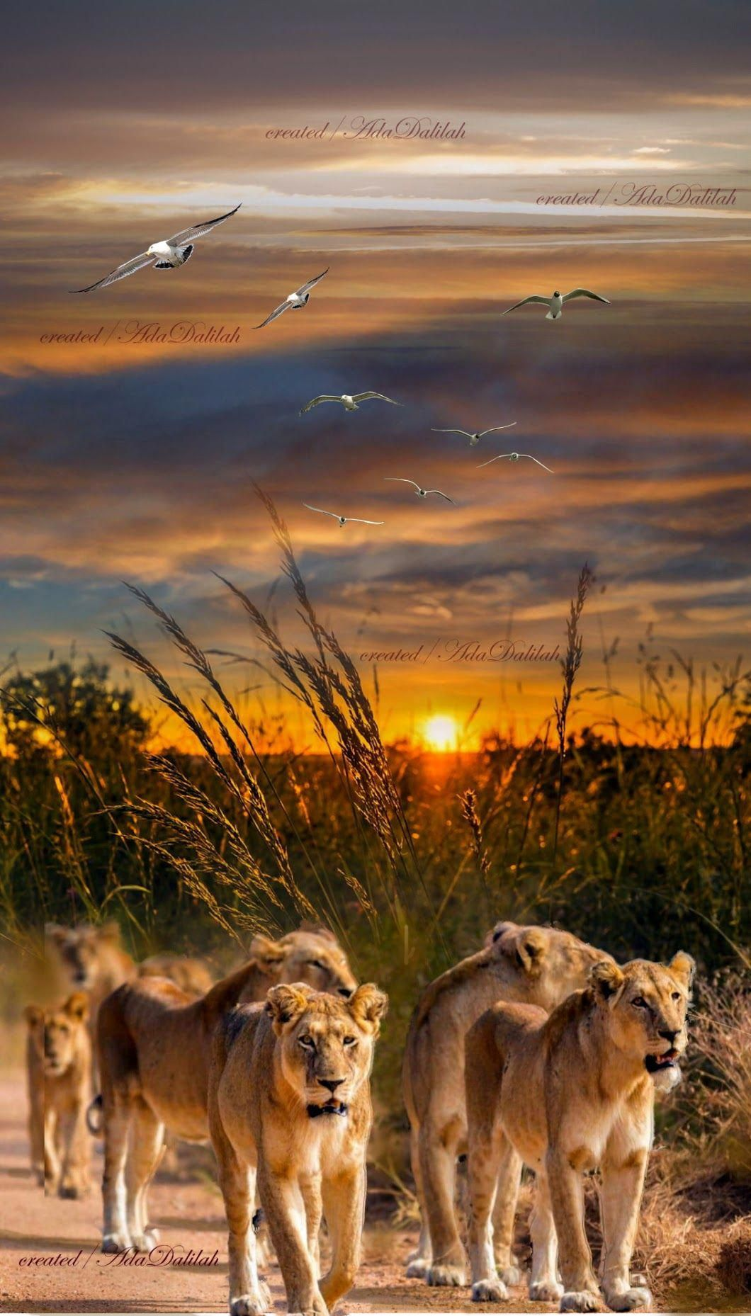 Pin by GGPics on Landscape Tips Big cats photography
