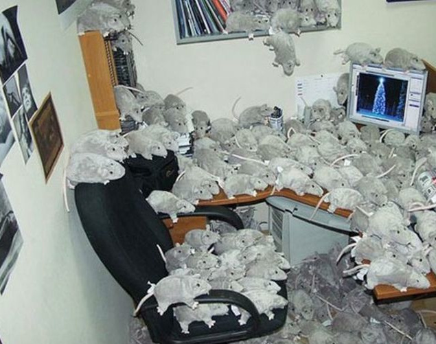 cubicle prank rats cubiclelife cubicle pranks pinterest cubicle