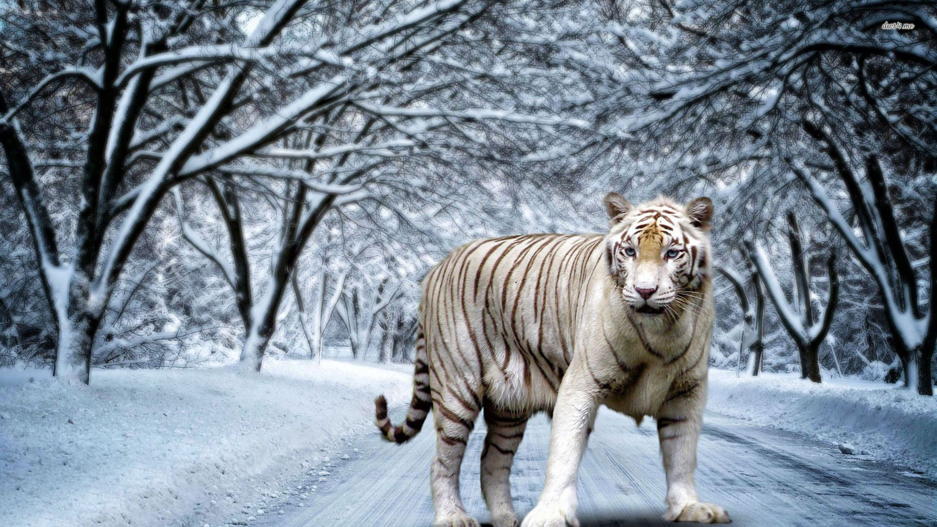White Tiger 3d Wallpaper Full Hd Hd Desktop Katzen Desktop