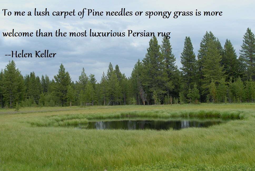 Great Quote Picture Of Yellowstone Np Yellowstone National Park