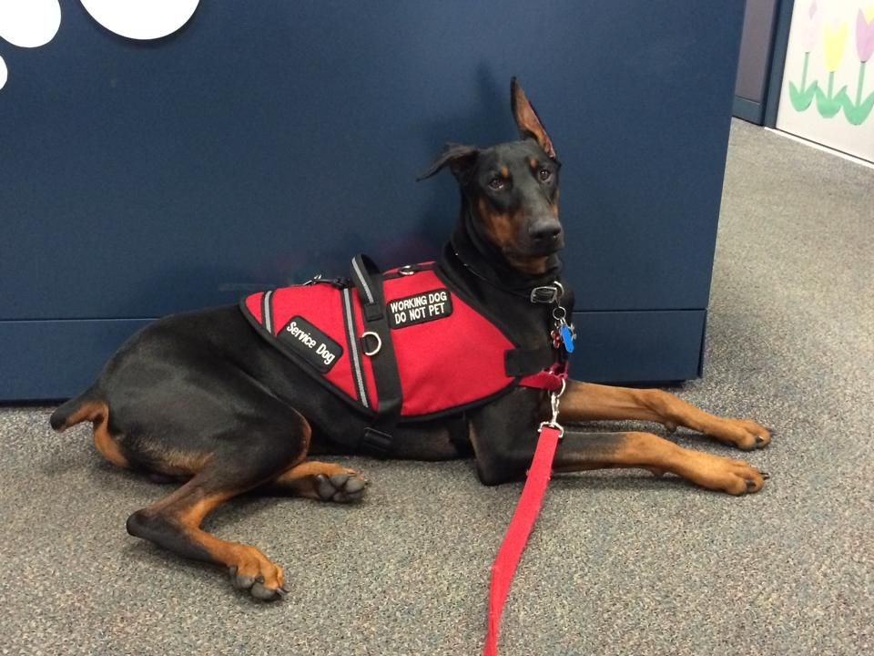 Ten Things People Believe About Service Dogs (That Simply