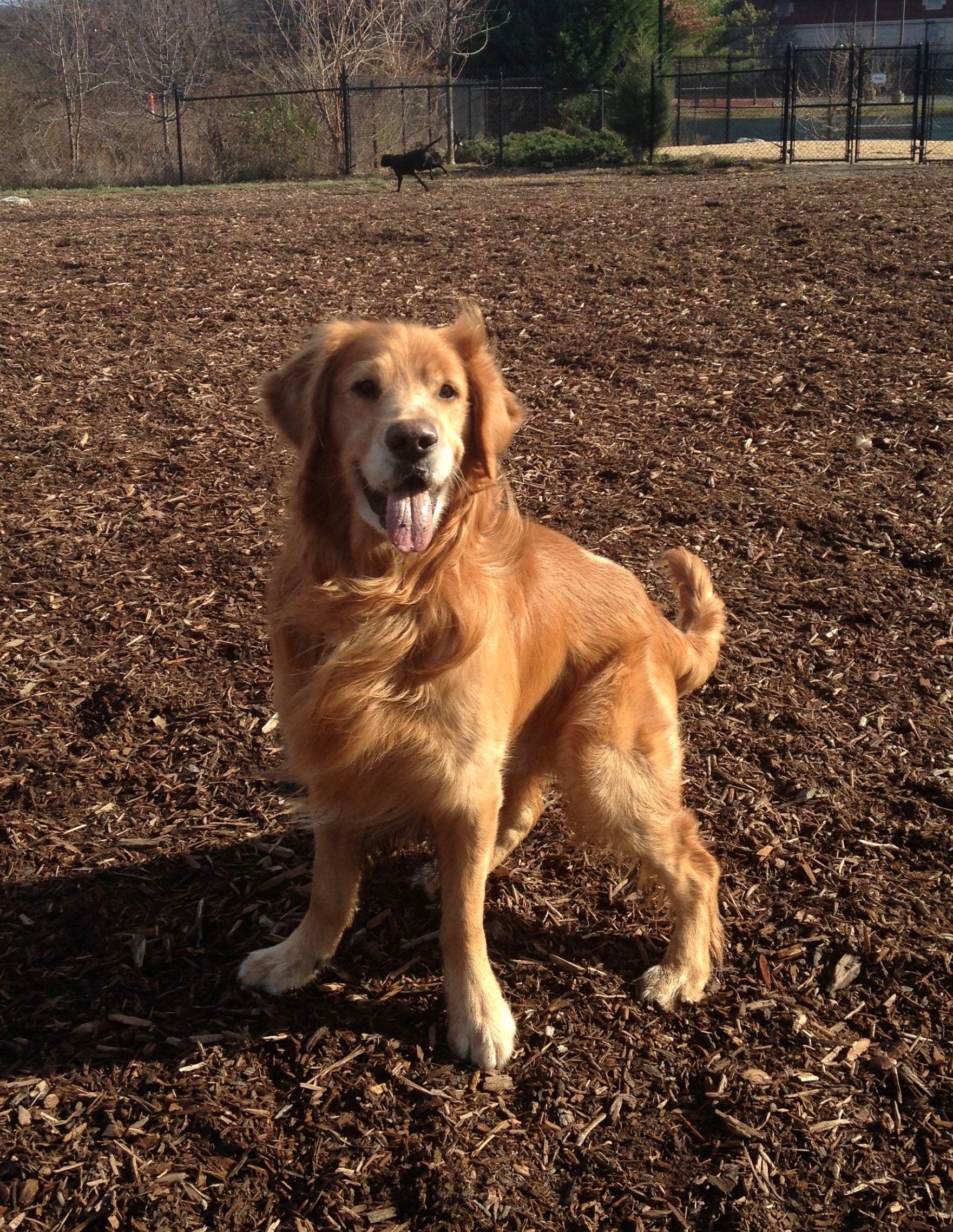 Pin By Wanda Davis On I Love Golden Retrievers Dogs Crate Training Dog Cat