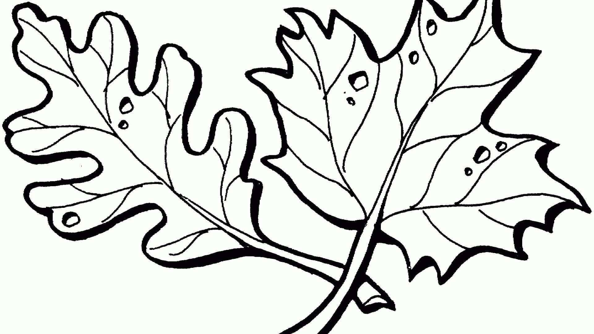 46++ Printable leaf coloring sheet information