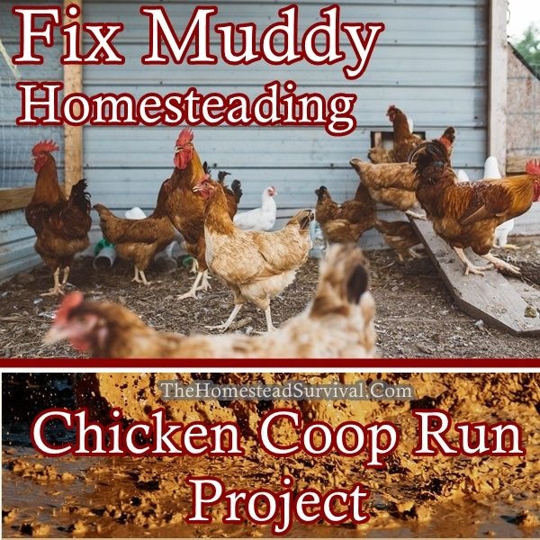 Fix Muddy Homesteading Chicken Coop Run Project