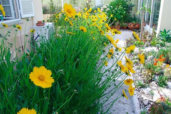 5 Plants You Almost Never Have to Water Drought resistant plants