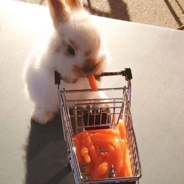 This bunny is busy doing errands. I die from the cuteness ...