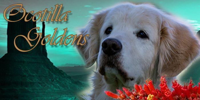 Welcome To Ocotilla Goldens Karen Lamb S Website Rally Classes