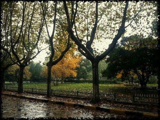 Rain in Autumn 秋雨