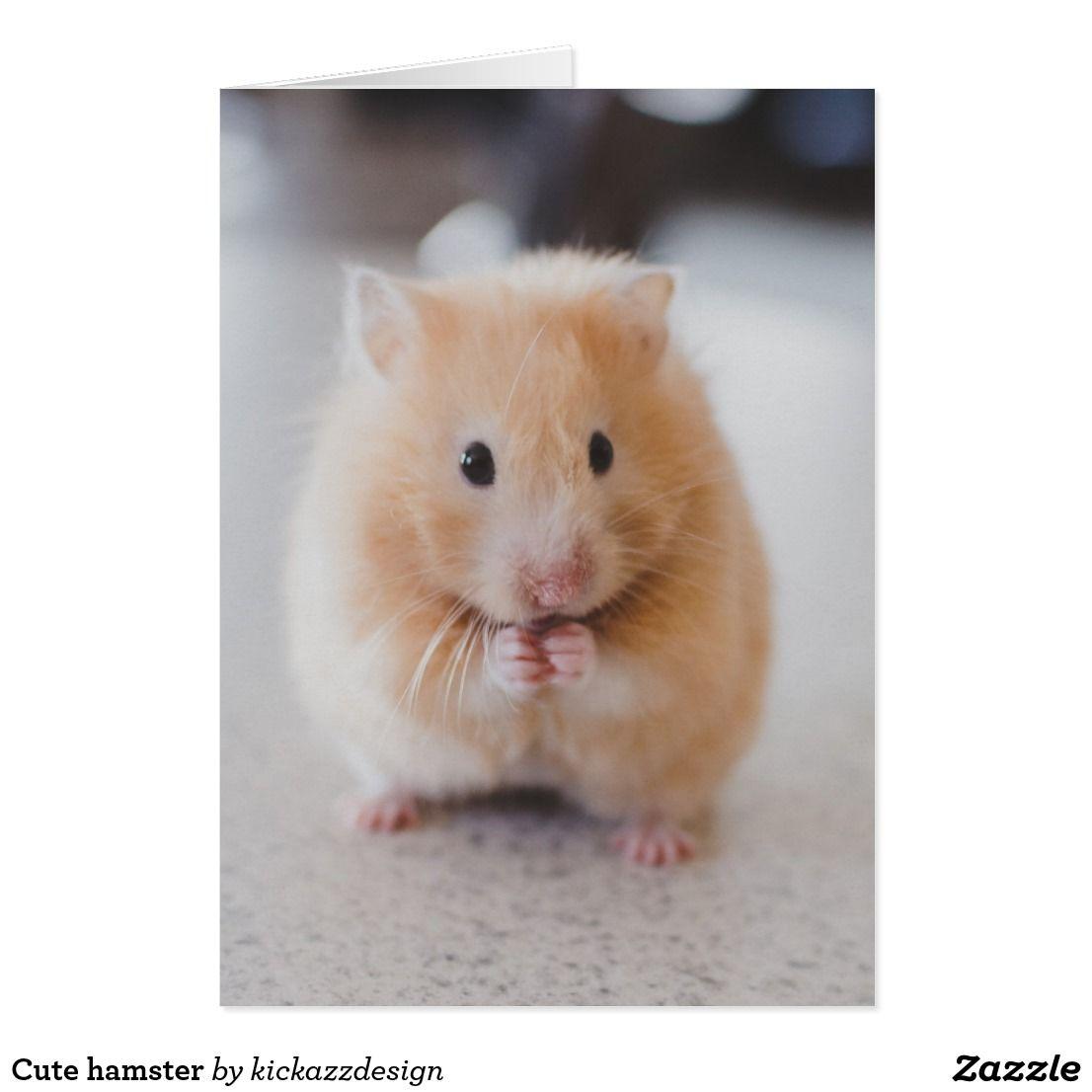 Cute Hamster Card Zazzle Com In 2020 Funny Hamsters Cute