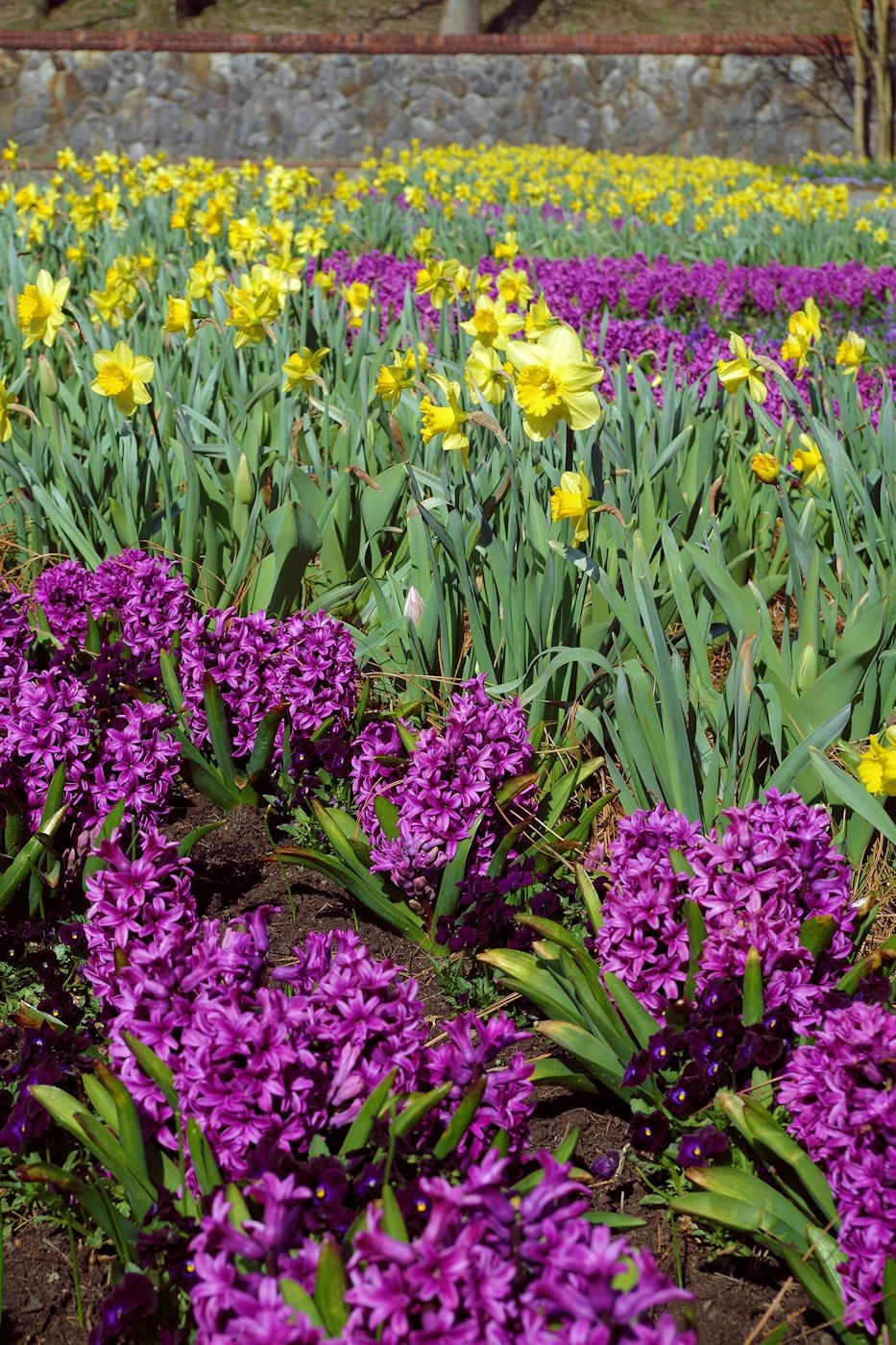 Todays Blooms In The Biltmore Estate Walled Garden March 24 2015