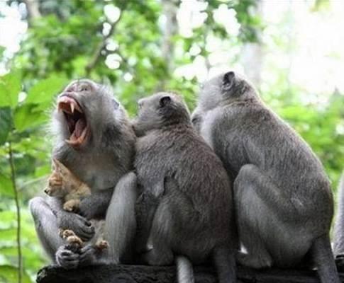 قرود تتسبب بمقتل مسن وطعن آخر في سراة عبيدة اخباريات Animals Ecommerce Hosting Gorilla