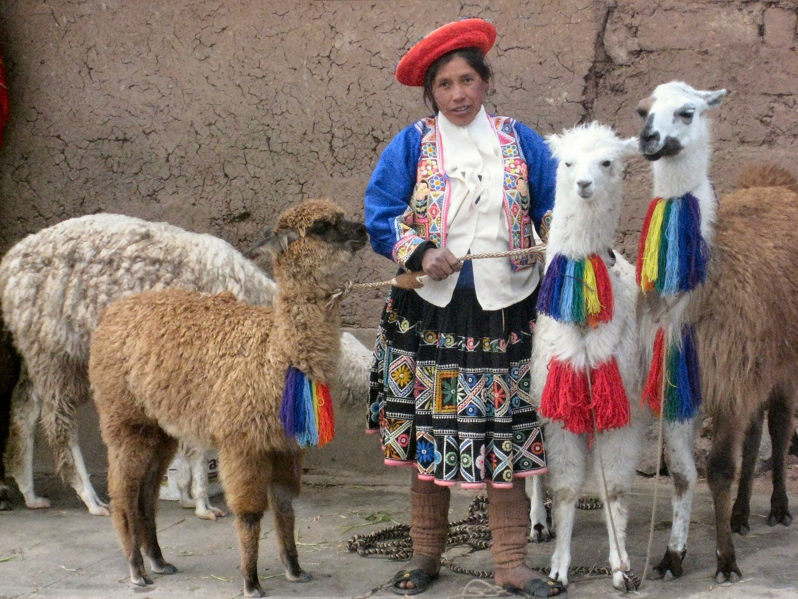 Llamas In Peru Love The Yarn Decorations With Images Inca