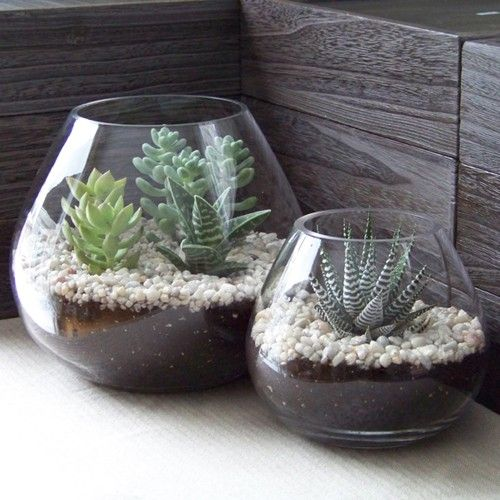 Photo of Indoor and Outdoor Succulent Gardens That Will Make To Say Wow – The ART in LIFE
