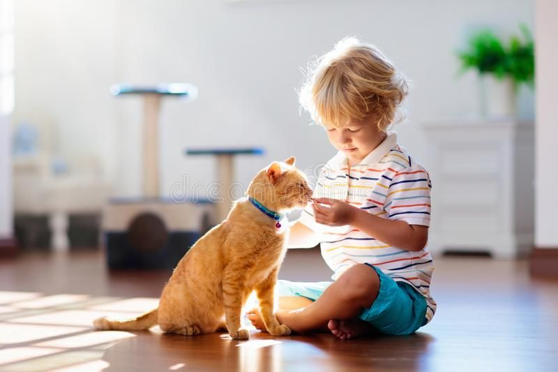 Child Playing With Cat At Home Kids And Pets Royalty Free Stock Images Ad Home Kids Cat Child Playing Animals For Kids Kids Playing Cute Ginger
