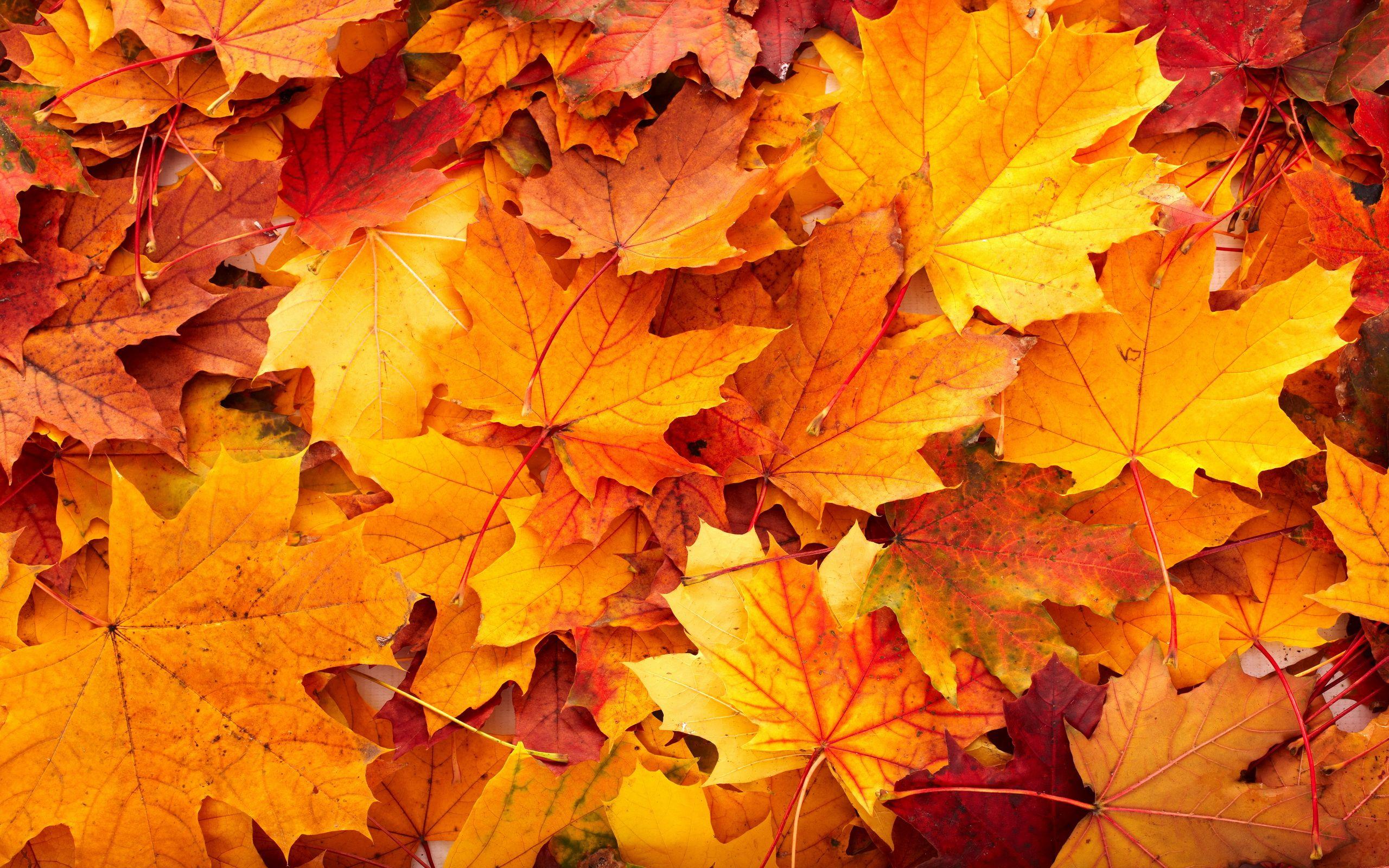 September Backgrounds Autumn Wallpapers Autumn Fall Nature