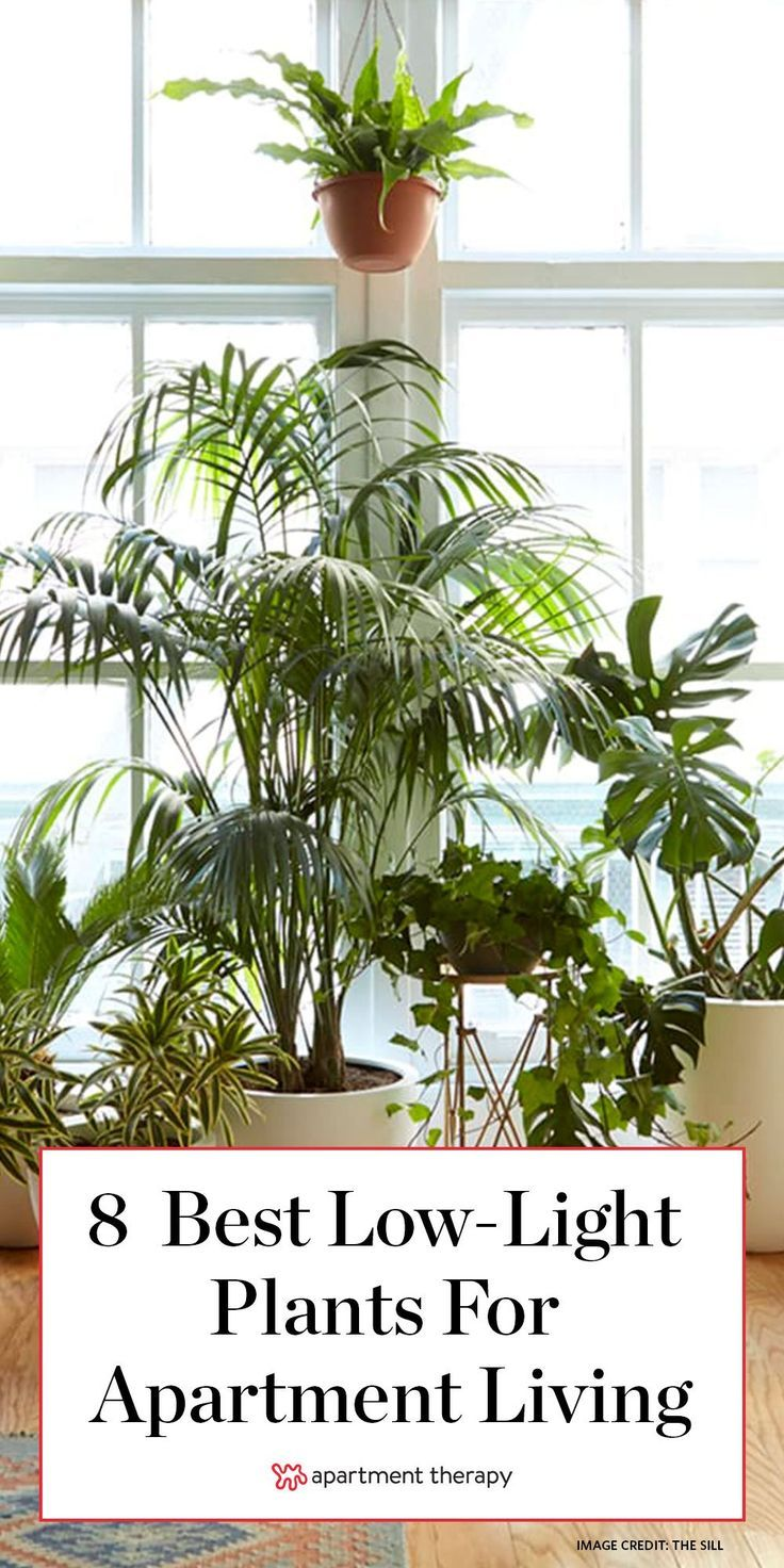 8 Houseplants that Can Survive Urban Apartments, Low Light ...