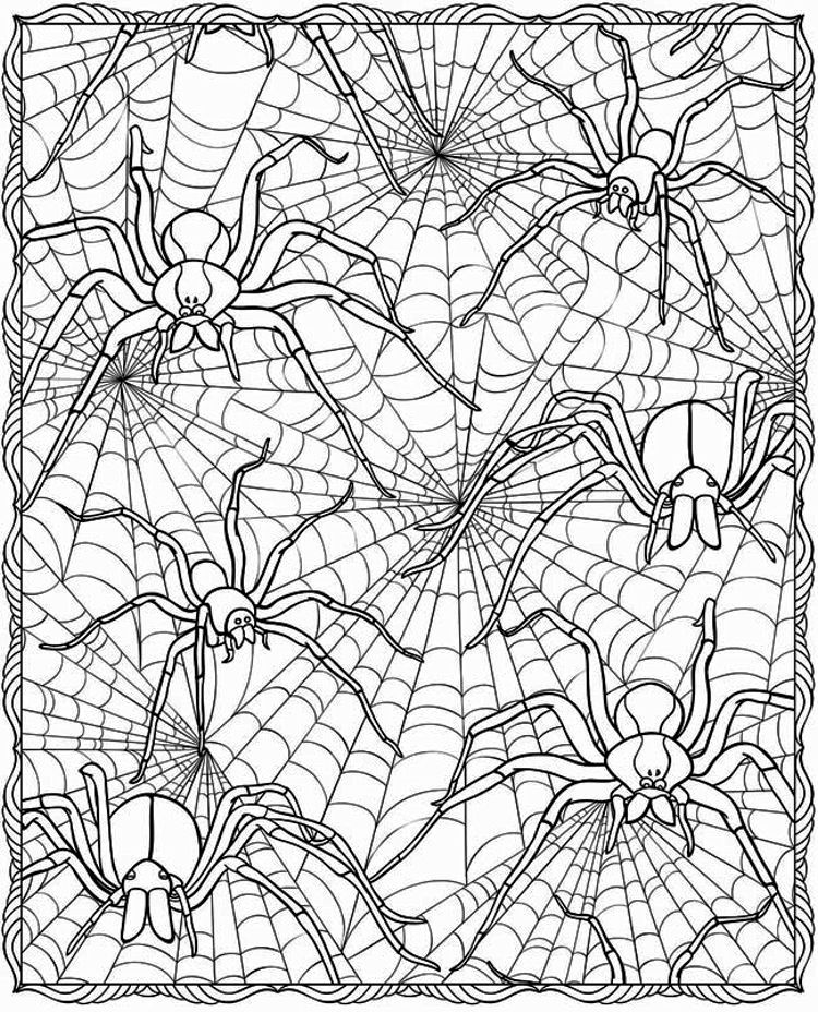 spider web coloring page # 24