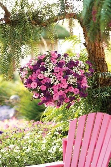 Purple And Pink Petunias In A Hanging Basket