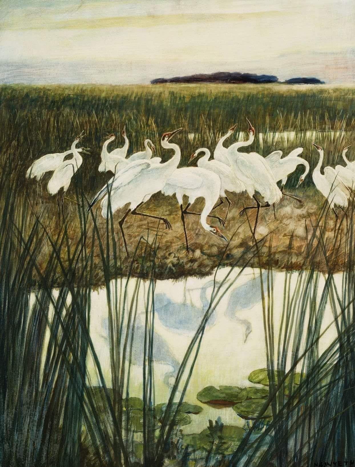 N.C Wyeth | Иллюстрации, Большая картина, Картины