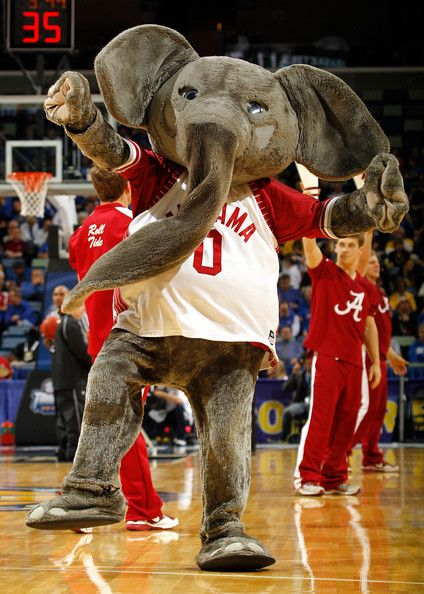 Big Al Elephant Mascot Of The Alabama Crimson Tide Alabama