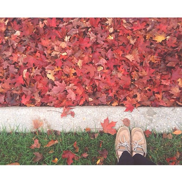 """I'm so glad I live in a world where there are Octobers."" -Anne of Green Gables  #Padgram"