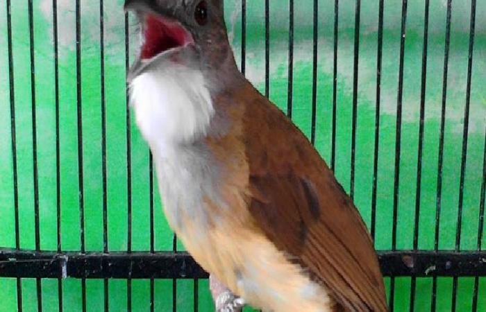 Pin Di Perawatan Burung