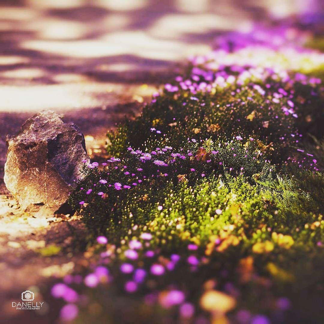 Good Morning! #flowers #goodmorning