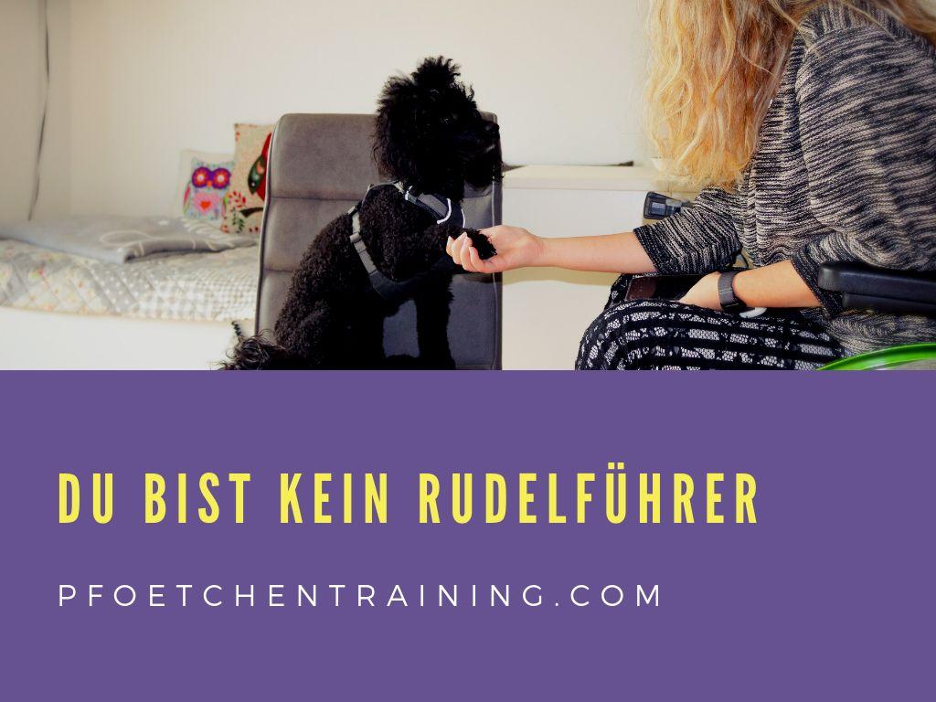 Darum Bist Du Kein Rudelfuhrer Pfotchentraining Hundeerziehung Hundchen Training Hundetraining