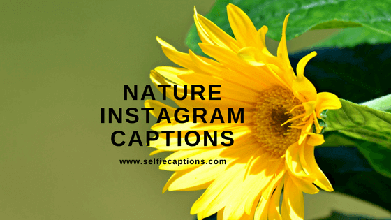 Caption Instagram About Nature 6