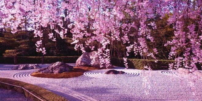 Los Angeles On Twitter Cherry Blossom Wallpaper Anime Cherry Blossom Blossom Garden