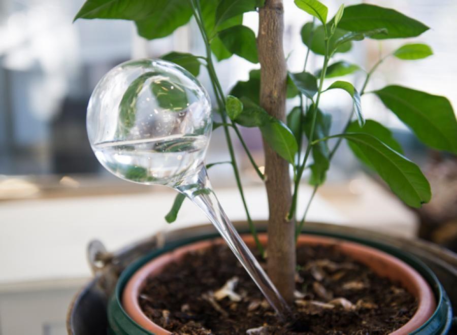 Kasteluvahti, lasia. Glass flower ball   Muurla