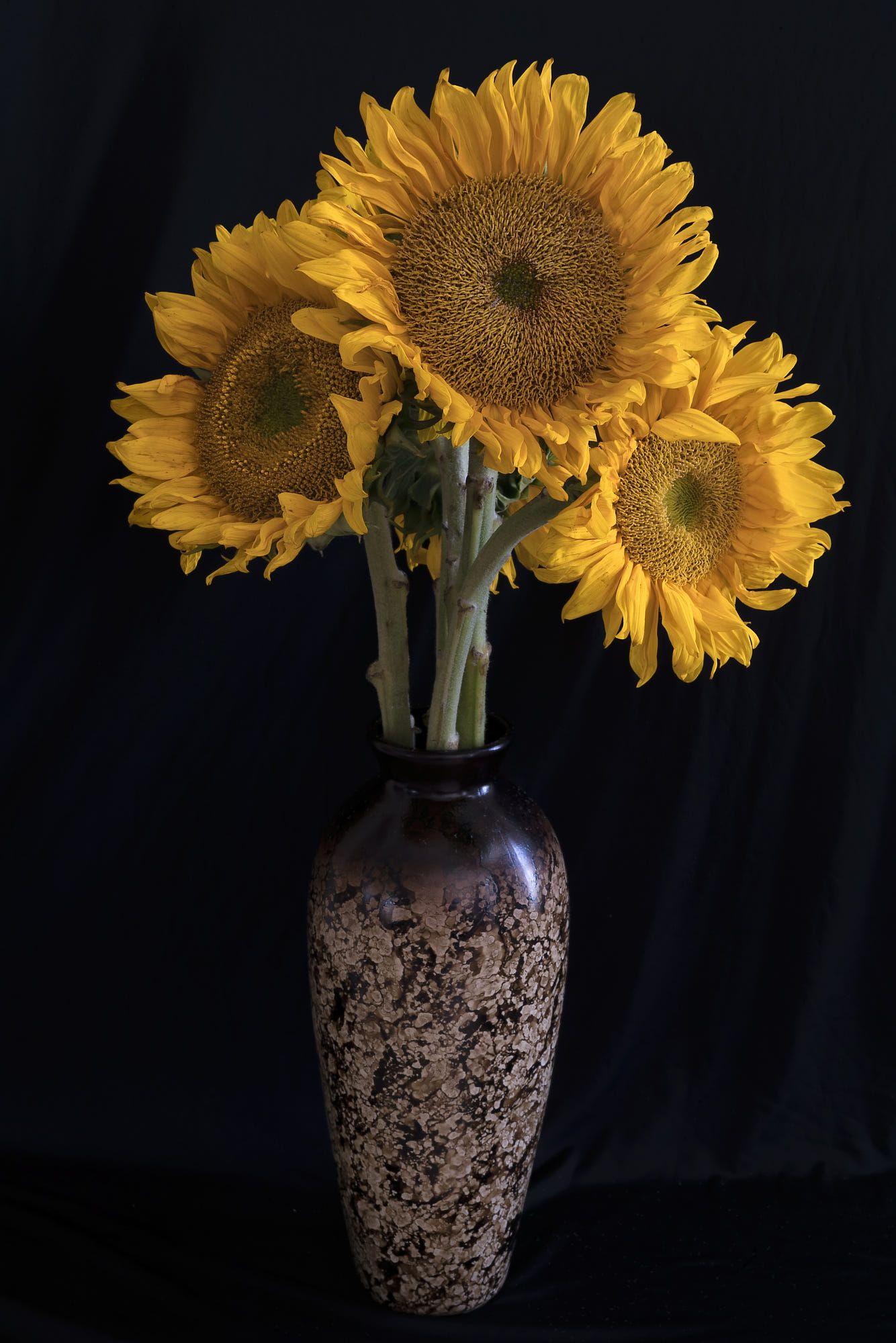Sunflowers By Frank Dobrushken Sunflower Vase Arrangement