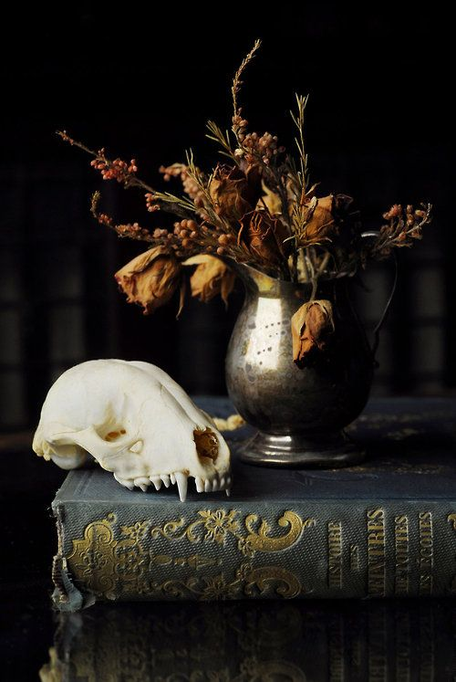 I often derive a peculiar satisfaction in conversing with the ancient and modern dead, — who yet live and speak excellently in their works...Still Life by Hannah Combs.