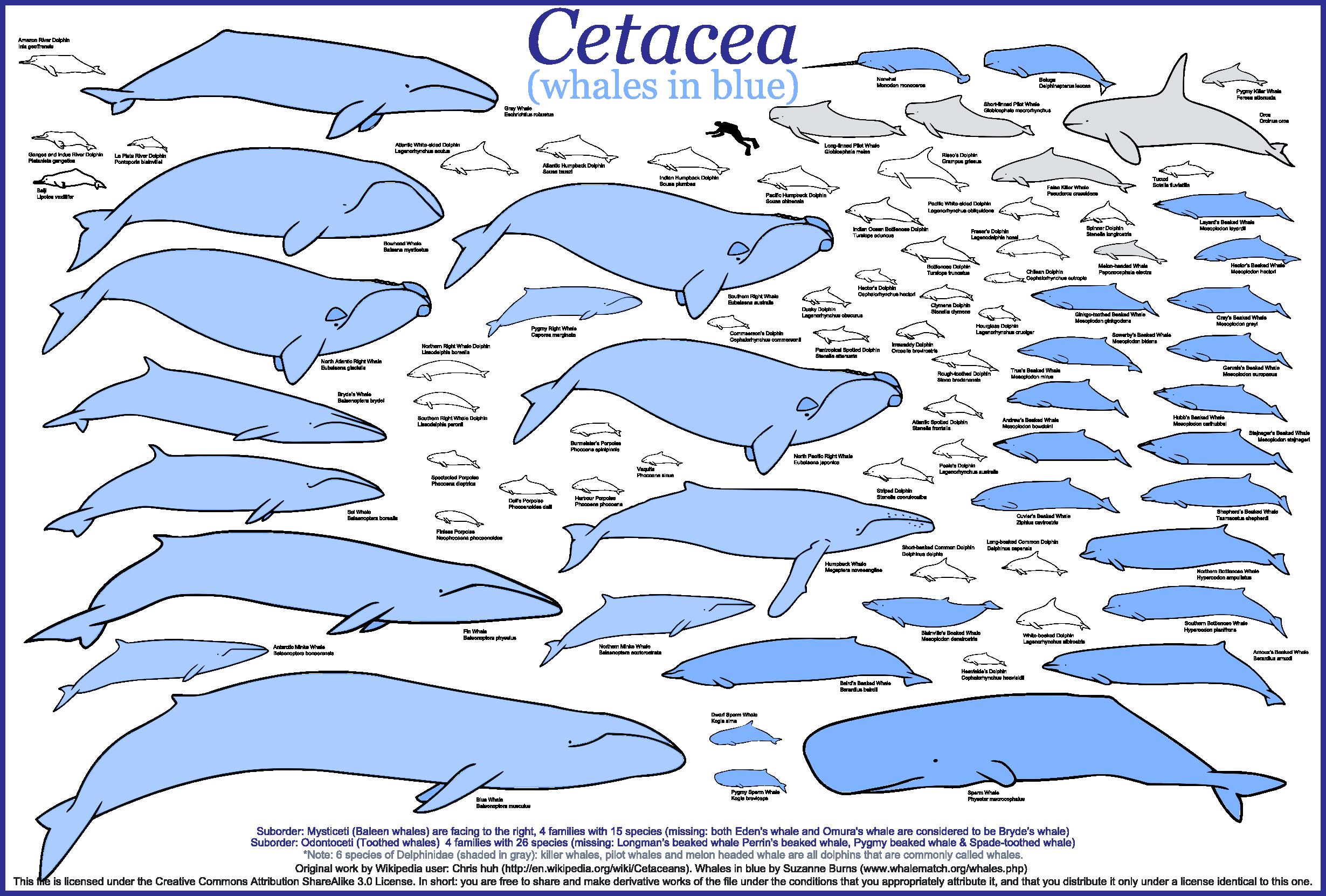 Chart #1111 Whale Chart