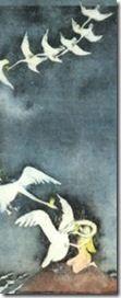 Los cisnes salvajes (II) - Andersen