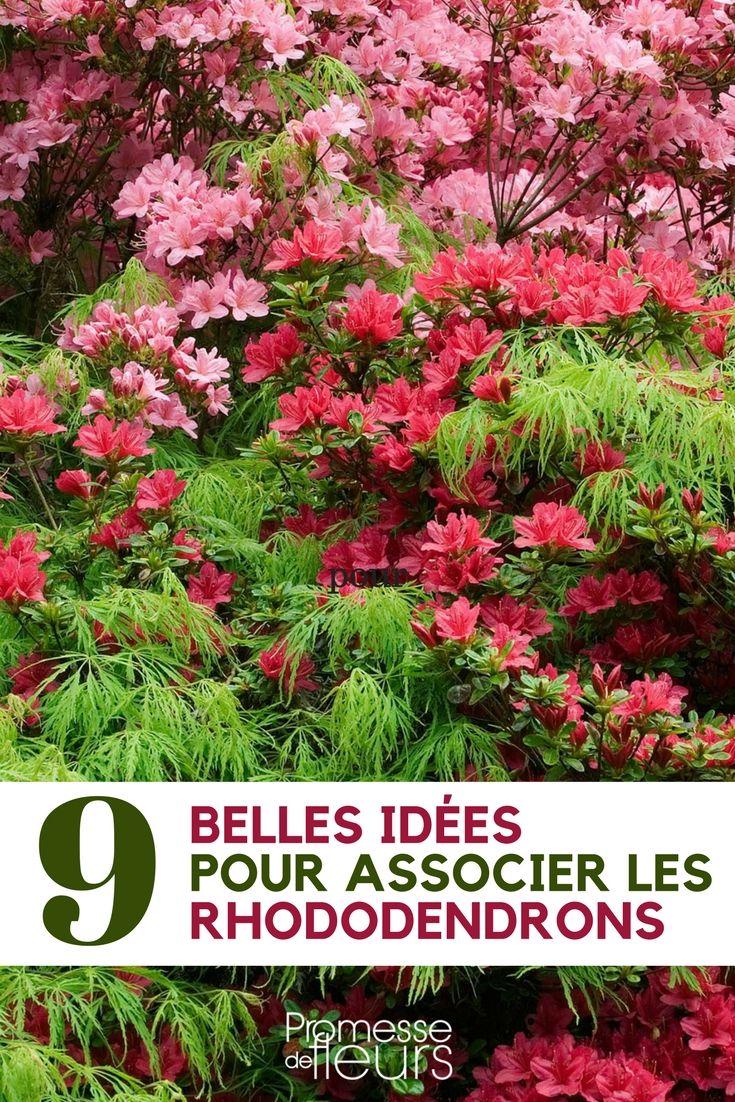 Plantes Pour Jardin Contemporain rhododendron : 9 idées d'associations réussies