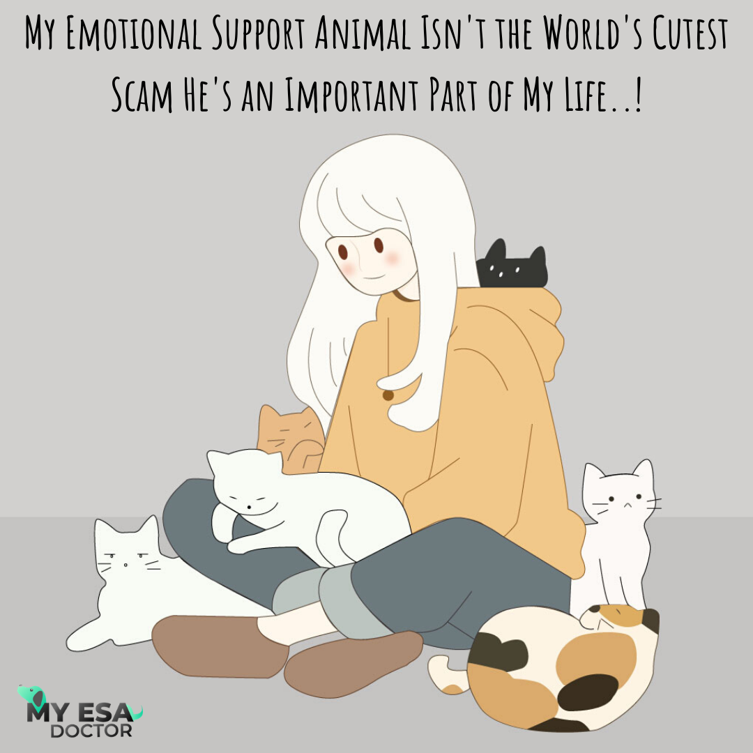 ESA Letter Emotional support animal, Animal letters, Animals