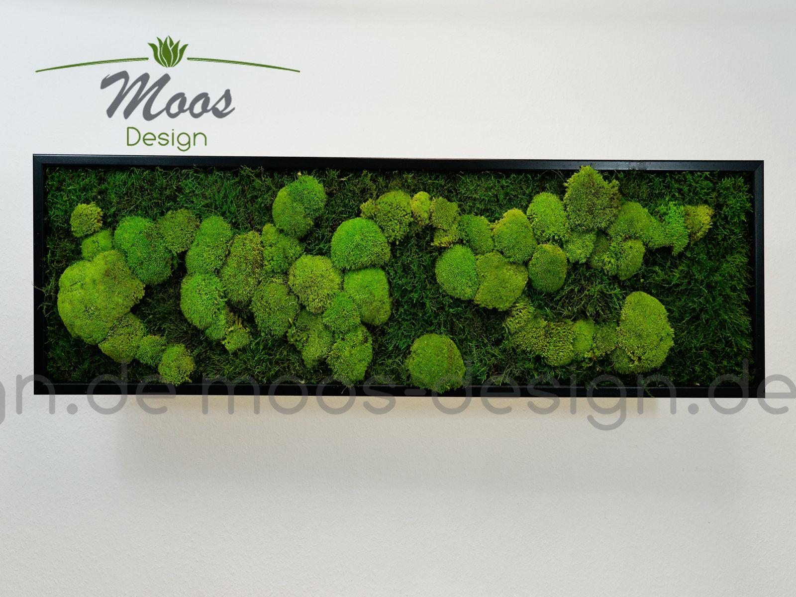 Moosbild 140x40 cm mit Kugelmoos und Flachmoos jetzt kaufen bei ...