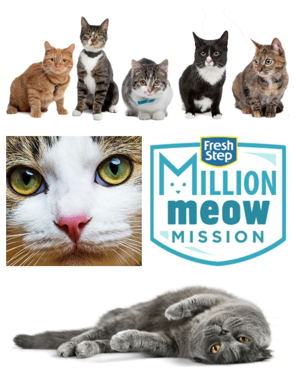 June is Adopt a Shelter Cat Month Fresh Step Million Meow