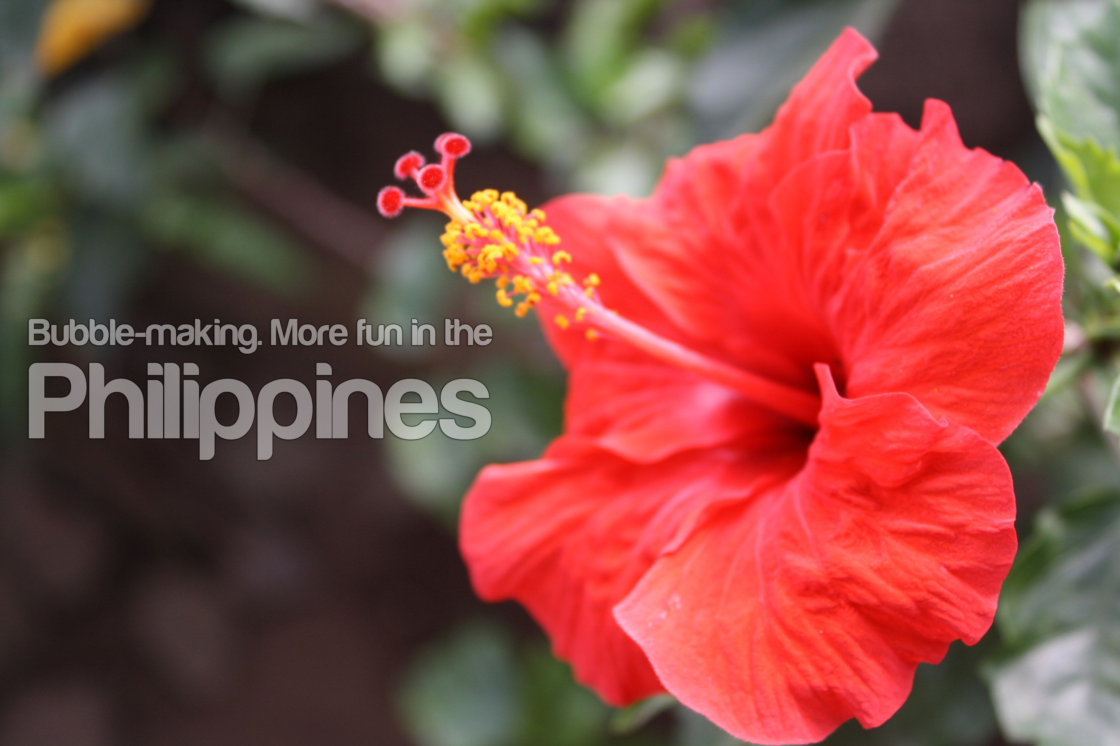 Gumamelahibiscus flower i love the philippines pinterest gumamelahibiscus flower izmirmasajfo