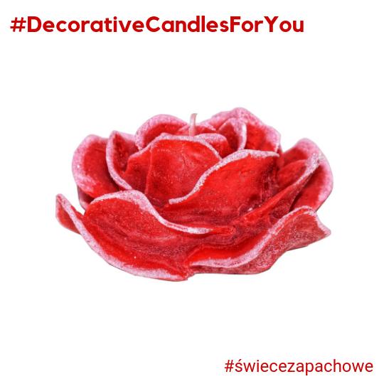 Walentynkowy średni Kwiat Czerwonej Róży O Zapachu Różanym