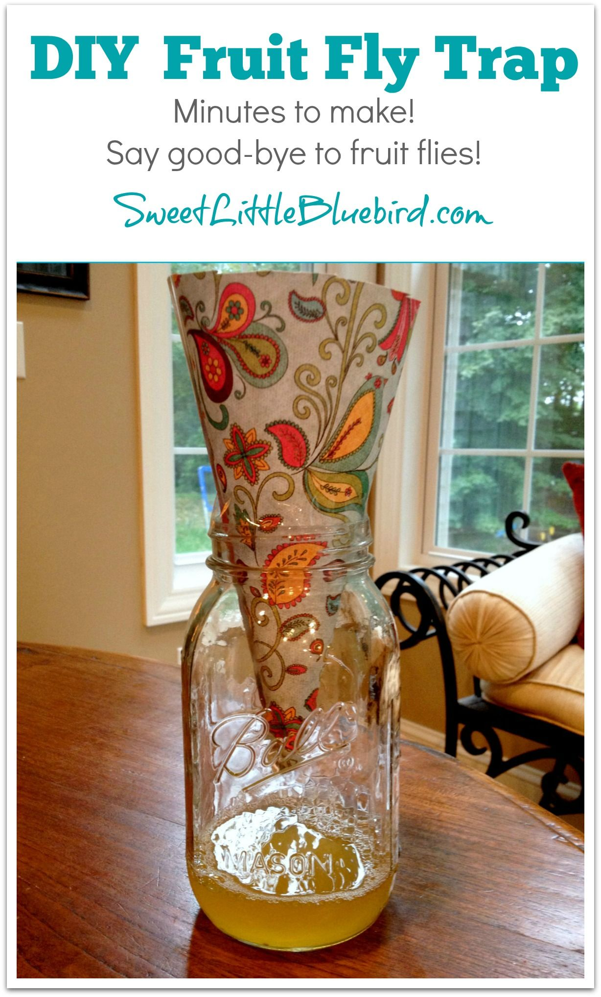 Diy fruit fly trap for the home pinterest limpieza
