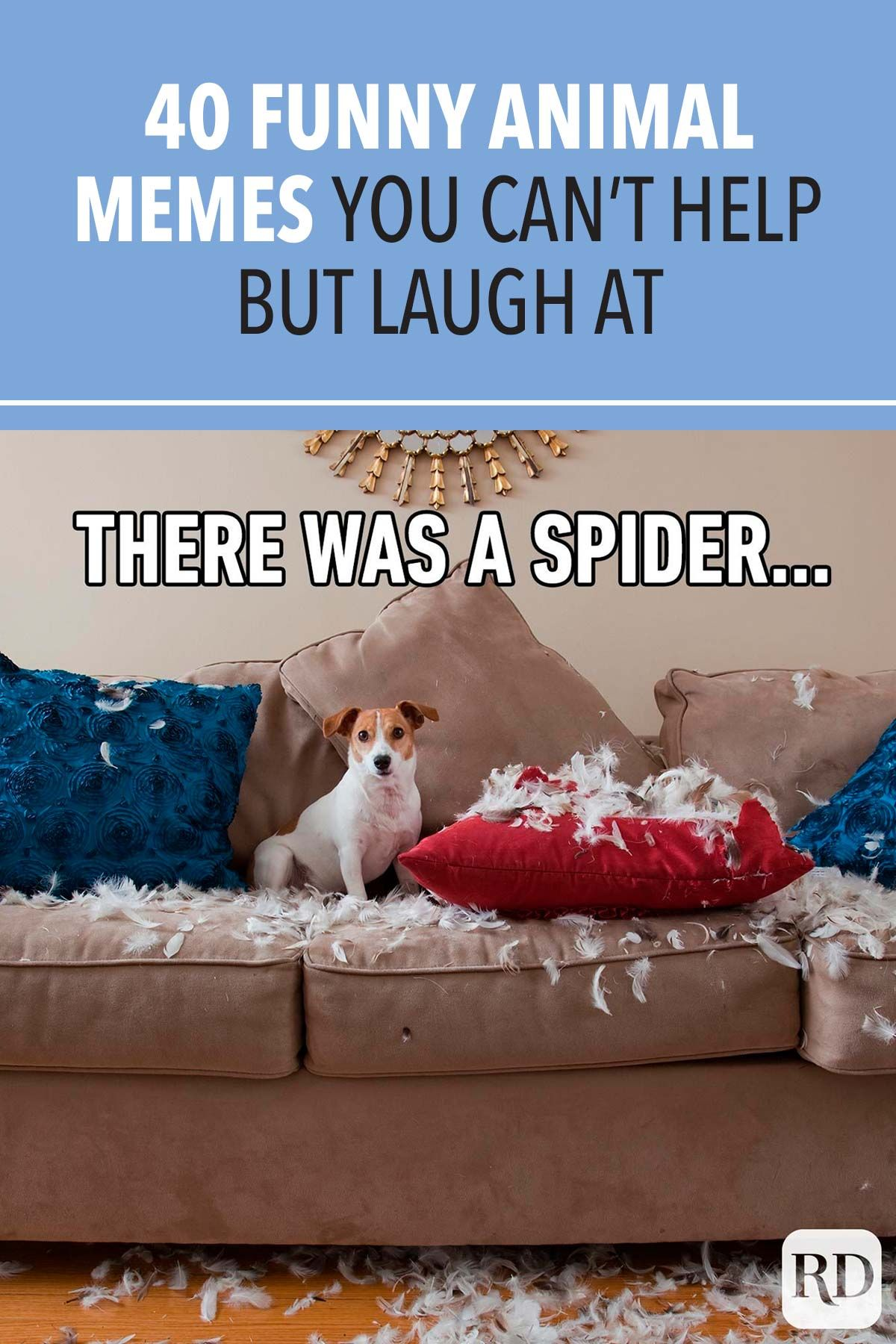 40 Funny Animal Memes You Can T Help But Laugh At In 2021 Funny Animal Memes Animal Memes Funny Animals