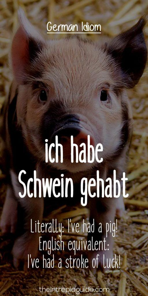 German Idioms: ich habe Schwein gehabt.   Literally: I've had a pig!   English equivalent: I've had a stroke of luck!