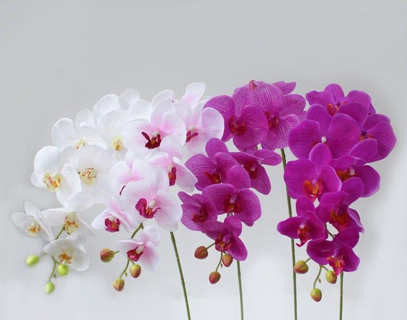 30 Gambar Bunga Pink 2020 Toko Bunga Bunga Mawar Pink