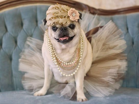 5 Photos That Prove Pugs In Costume Will Bring It At Halloween